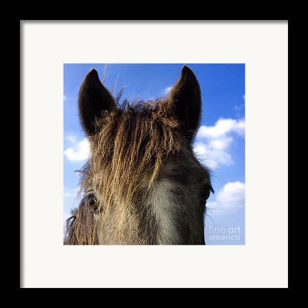 Outdoors Framed Print featuring the photograph Horse by Bernard Jaubert