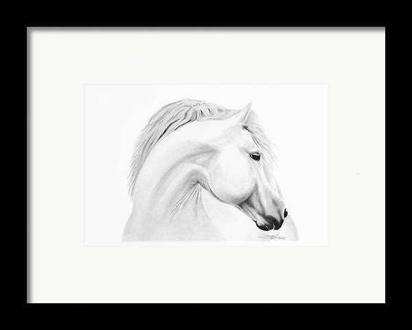 Horse Framed Print featuring the drawing Horse by Don Medina