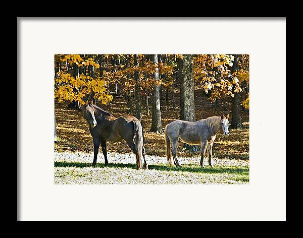 Animal Framed Print featuring the photograph Horses In Autumn Pasture  by Susan Leggett