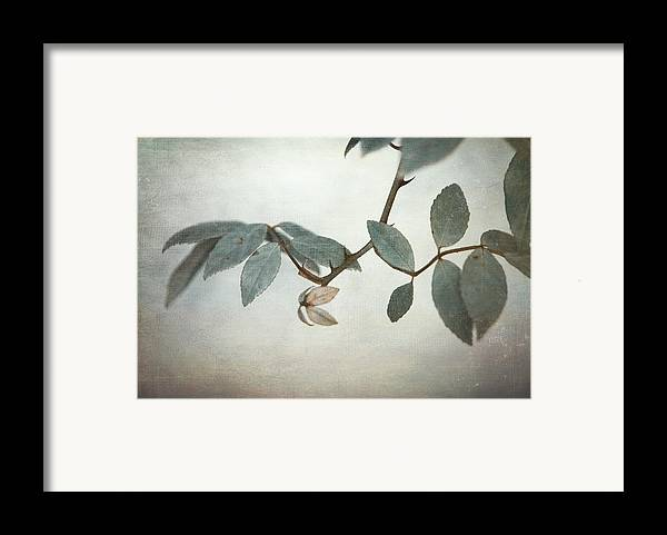 Leaves Framed Print featuring the photograph How Delicate This Balance by Laurie Search