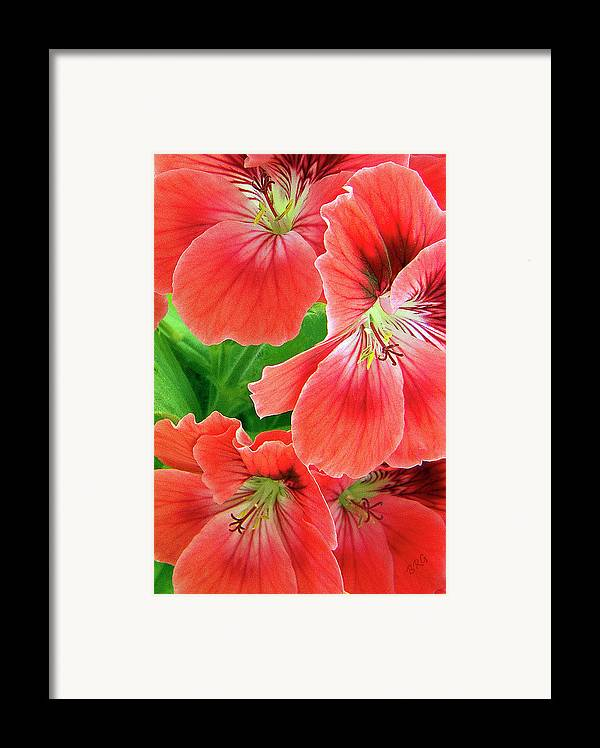 Red Framed Print featuring the photograph In The Garden. Geranium by Ben and Raisa Gertsberg
