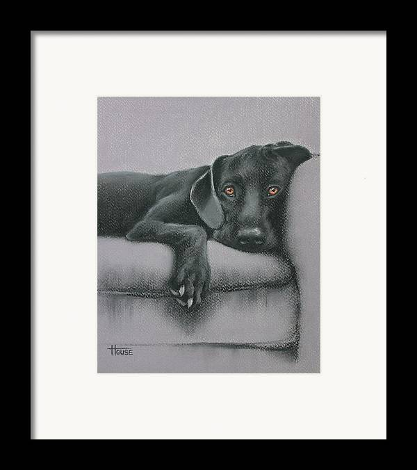 Black Framed Print featuring the drawing Jasper by Cynthia House