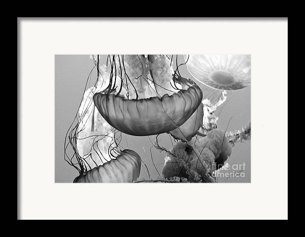 Jelly Fish Framed Print featuring the photograph Jellyfish Floating By by Artist and Photographer Laura Wrede