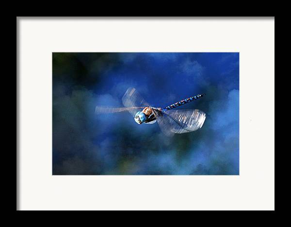 Dragonfly Framed Print featuring the photograph Jet Blue by Donna Kennedy