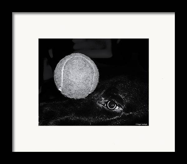 Dog Framed Print featuring the photograph Keep Your Eye On The Ball by Roger Wedegis