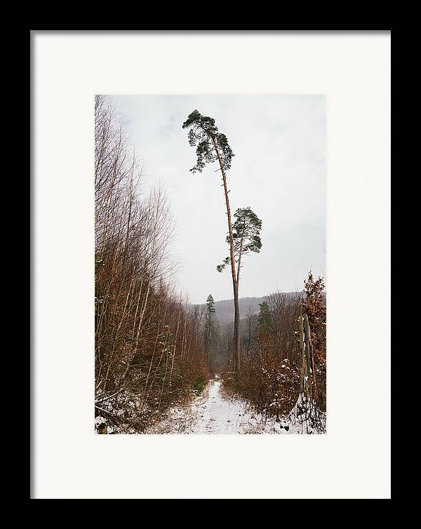 Winter Framed Print featuring the photograph Large Trees In The Nature Park In Winter by Matthias Hauser