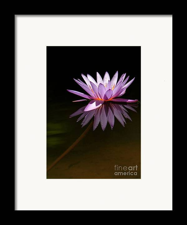 Macro Framed Print featuring the photograph Lavendar Reflections by Sabrina L Ryan