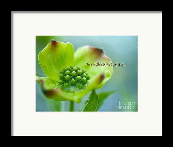 Fine Floral Photography Framed Print featuring the photograph Little Things by Irina Wardas