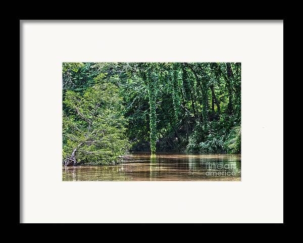Cypress Framed Print featuring the photograph Louisiana Bayou Toro Creek Swamp by D Wallace