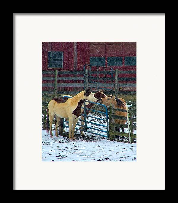 Horses Framed Print featuring the photograph Meeting Of The Equine Minds by Julie Dant