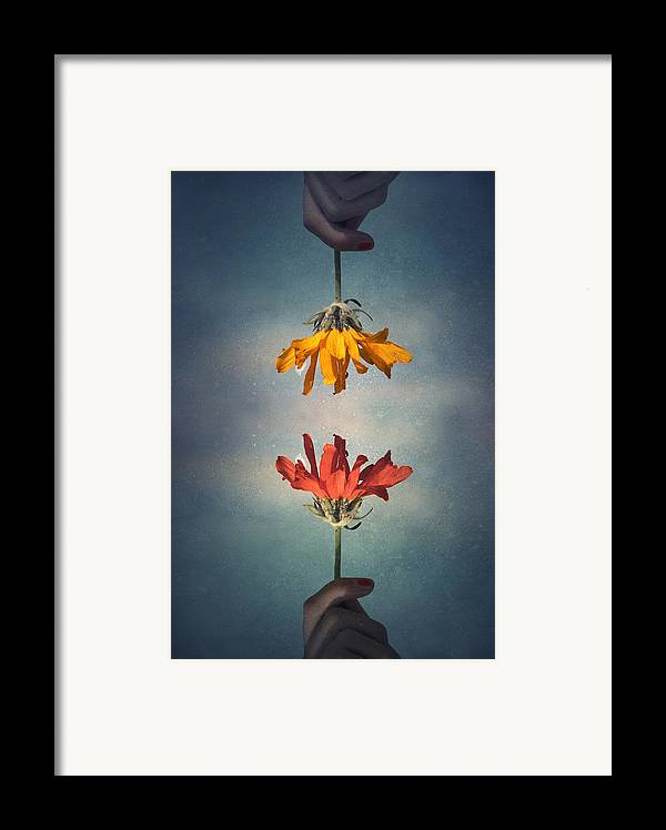 Middle Ground Framed Print featuring the photograph Middle Ground by Tara Turner