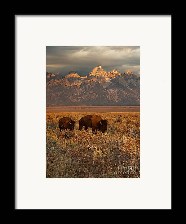 Grand Teton Framed Print featuring the photograph Morning Travels In Grand Teton by Sandra Bronstein
