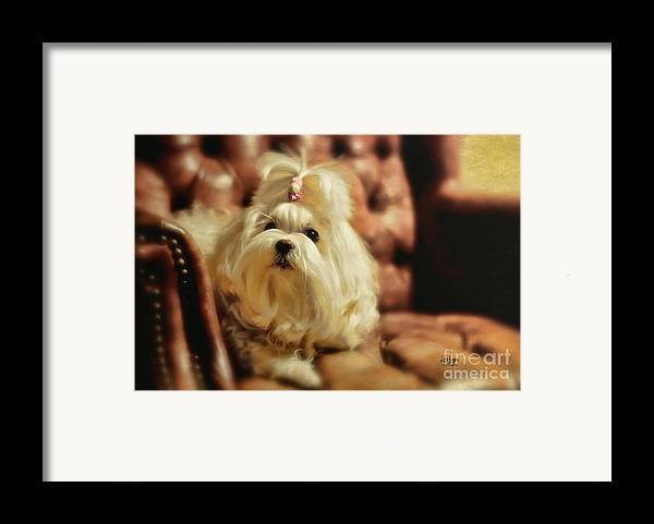 Dog Framed Print featuring the photograph My Chair by Lois Bryan