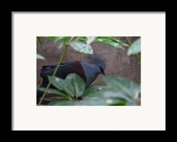 National Framed Print featuring the photograph National Zoo - Birds - 011329 by DC Photographer