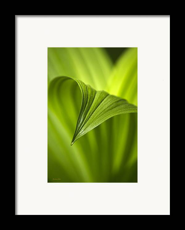Nature Framed Print featuring the photograph Nature Unfurls by Christina Rollo