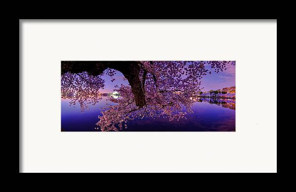 Dc Framed Print featuring the photograph Night Blossoms by Metro DC Photography