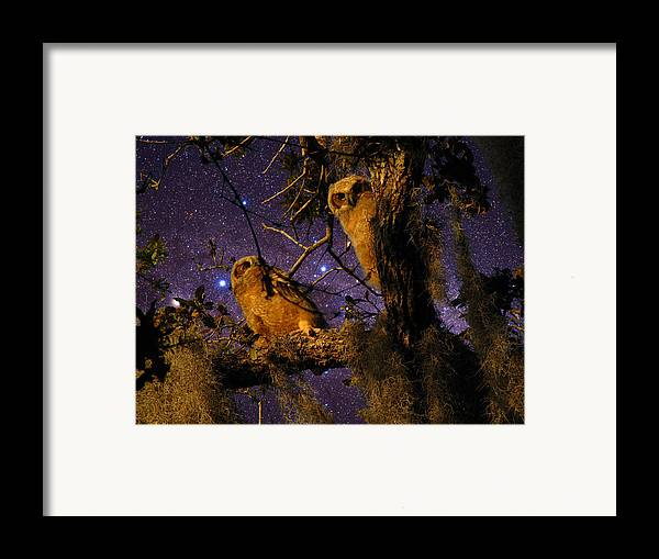 Phil Framed Print featuring the photograph Night Owls by Phil Penne