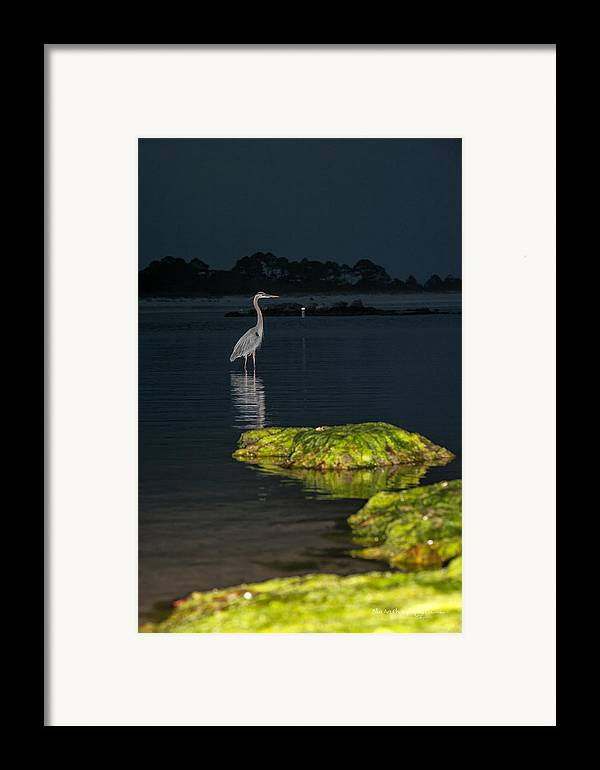 Heron Framed Print featuring the photograph Night Stalker by Volker blu Firnkes