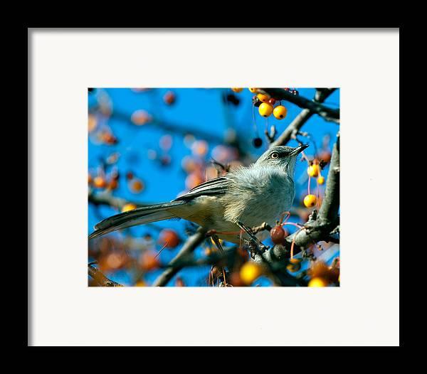 Mockingbird Framed Print featuring the photograph Northern Mockingbird by Bob Orsillo
