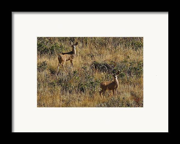 Black Mesa Framed Print featuring the photograph Oh Deer by Charles Warren