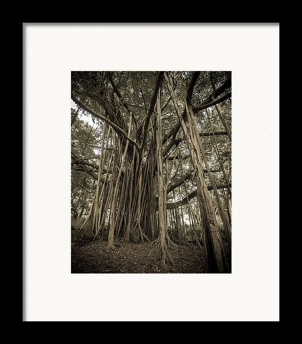 3scape Photos Framed Print featuring the photograph Old Banyan Tree by Adam Romanowicz