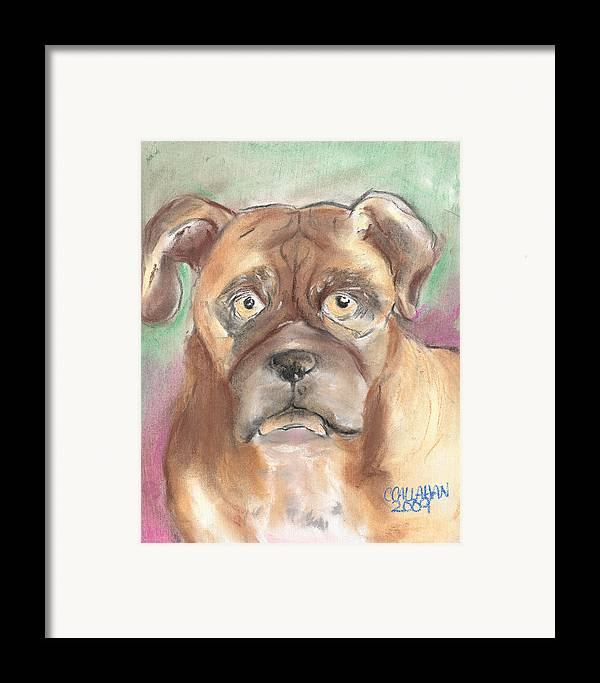 Animals Framed Print featuring the pastel Old Boxer by Christine Callahan
