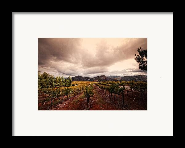 Winery Framed Print featuring the photograph Orfila by Ryan Weddle