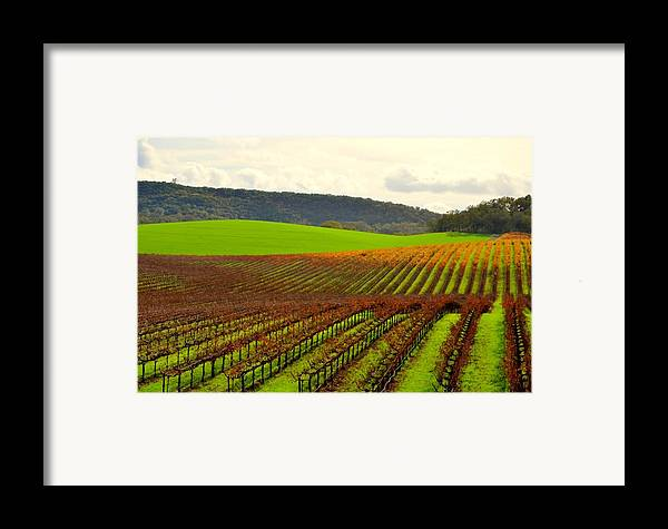 Vineyard Framed Print featuring the photograph Pastoral Vineyards Of Asti by Antonia Citrino