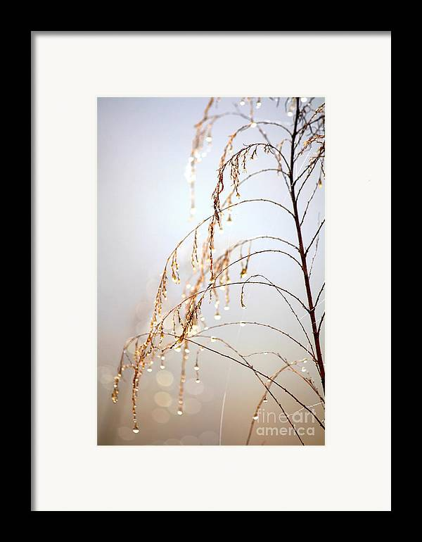 Nature Framed Print featuring the photograph Peaceful Morning by Carol Groenen