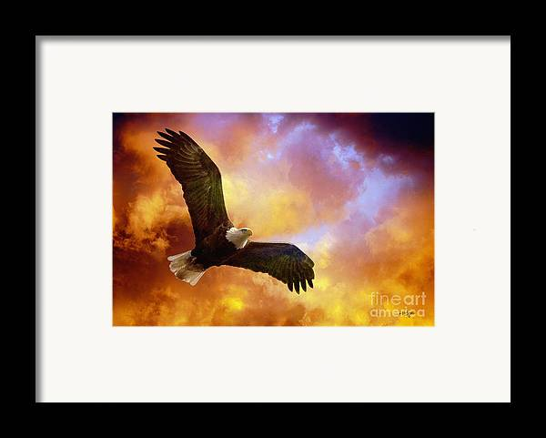 Eagle Framed Print featuring the photograph Perseverance by Lois Bryan