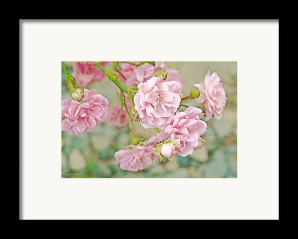 Rose Framed Print featuring the photograph Pink Fairy Roses by Jennie Marie Schell