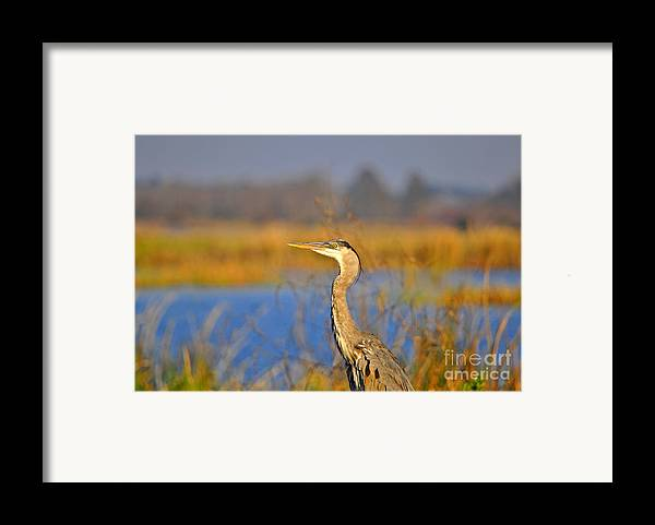 Heron Framed Print featuring the photograph Proud Profile by Al Powell Photography USA