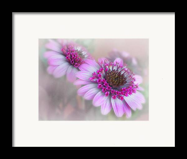 Flower Framed Print featuring the photograph Purple Blooms by David and Carol Kelly