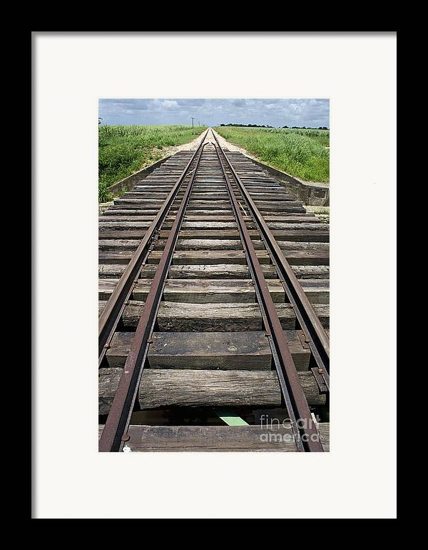 Nature Framed Print featuring the photograph Railroad Tracks by Sami Sarkis