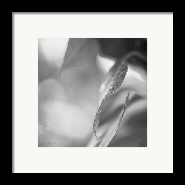 Rain Framed Print featuring the photograph Raindrops Two by Bob Orsillo