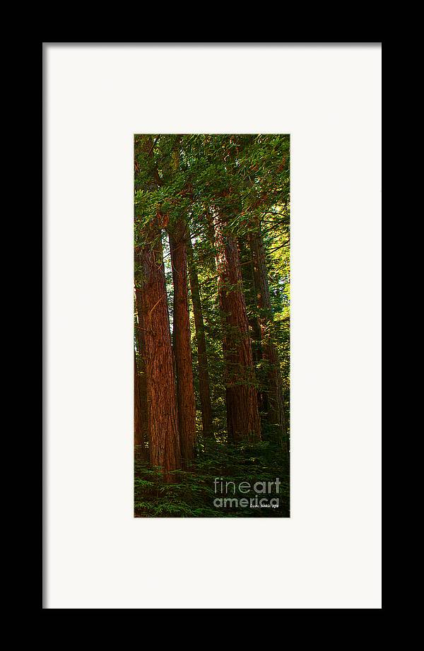 Redwoods Framed Print featuring the photograph Redwood Wall Mural Panel Three by Artist and Photographer Laura Wrede