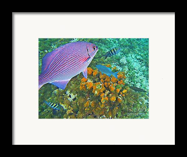 Fish Framed Print featuring the painting Reef Life by John Malone