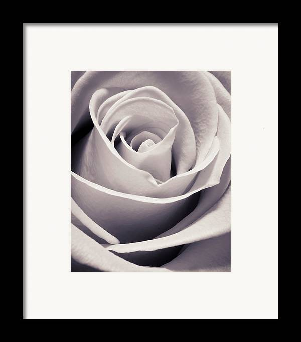 3scape Photos Framed Print featuring the photograph Rose by Adam Romanowicz