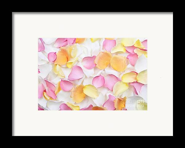 Petals Framed Print featuring the photograph Rose Petals Background by Elena Elisseeva