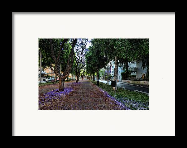 Foliage Framed Print featuring the photograph Rothschild Boulevard by Ron Shoshani