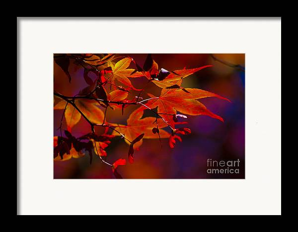 Leaves Framed Print featuring the photograph Royal Autumn A by Jennifer Apffel