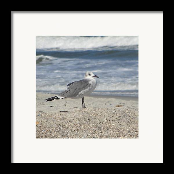Sea Framed Print featuring the photograph Seagulls At Fernandina 2 by Cathy Lindsey