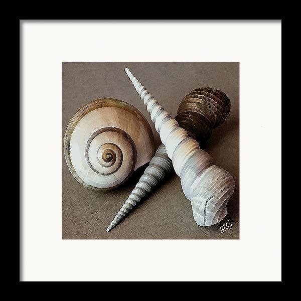 Seashell Framed Print featuring the photograph Seashells Spectacular No 24 by Ben and Raisa Gertsberg