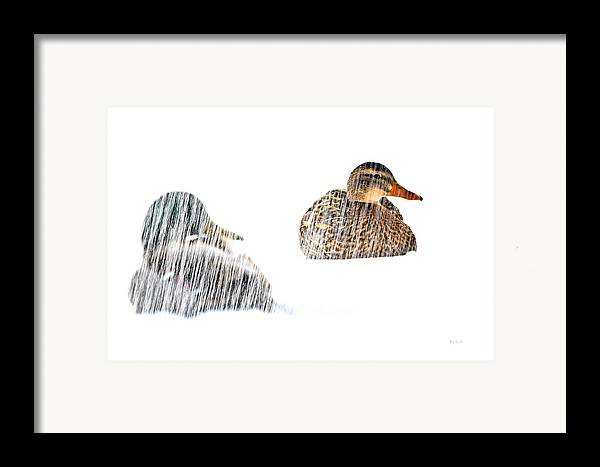 Duck Framed Print featuring the photograph Sitting Ducks In A Blizzard by Bob Orsillo