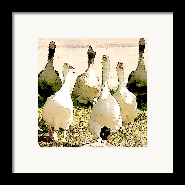 Geese Framed Print featuring the photograph Six Geese And A Duck by Artist and Photographer Laura Wrede