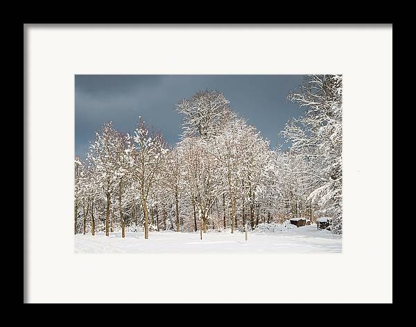 Winter Framed Print featuring the photograph Snow Covered Trees In The Forest In Winter by Matthias Hauser