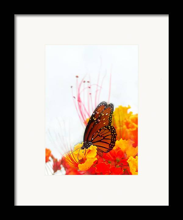 Soft Framed Print featuring the photograph Soft Embrace by Kume Bryant