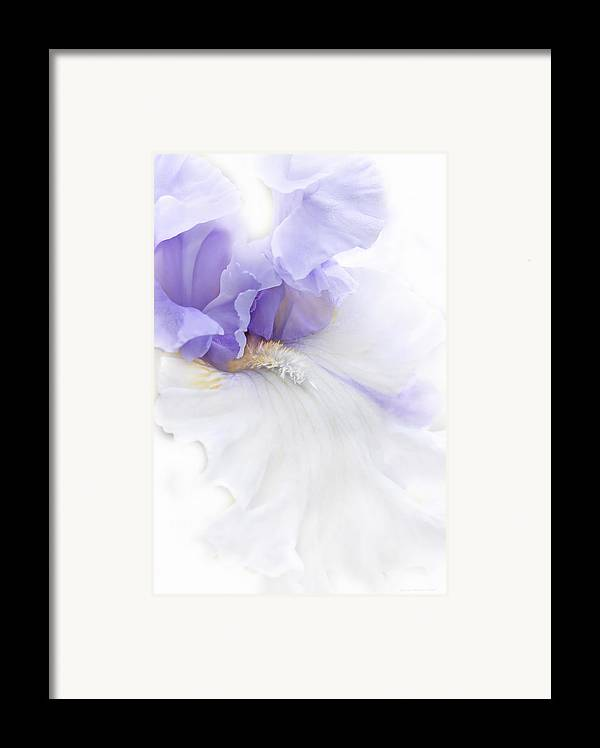 Iris Framed Print featuring the photograph Softness Of A Lavender Iris Flower by Jennie Marie Schell
