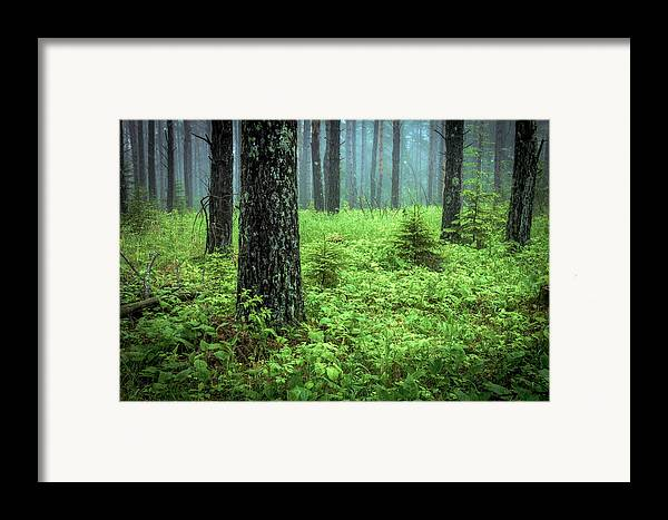 solstice Glow Solstice Woods Green Trees Forest Fog Mist hawk Ridge Duluth Minnesota Summer lake Superior summer Solstice Lush Magic Nature greeting Cards mary Amerman Framed Print featuring the photograph Solstice Glow by Mary Amerman
