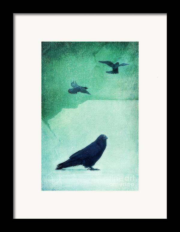 Raven Framed Print featuring the photograph Spirit Bird by Priska Wettstein